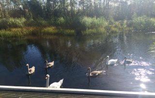 HCE Group Tree Sponsor Pond
